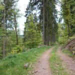 Bullauer Wald